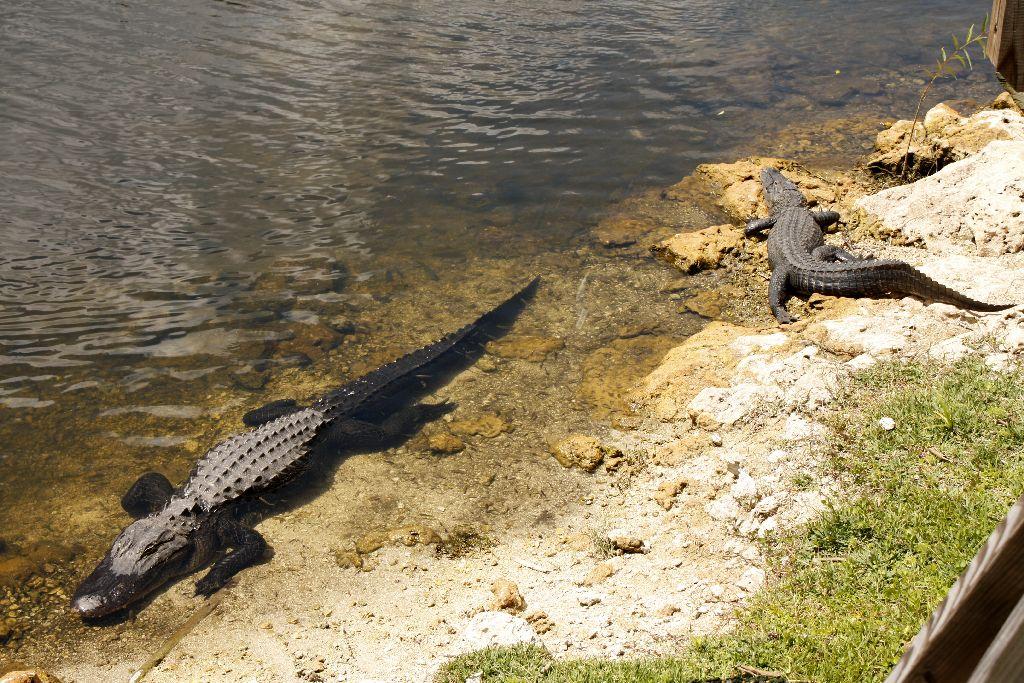 Florida-226.jpg