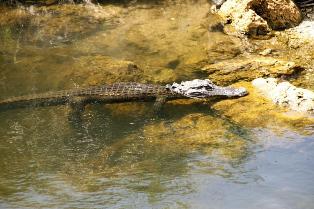 Florida-229.jpg