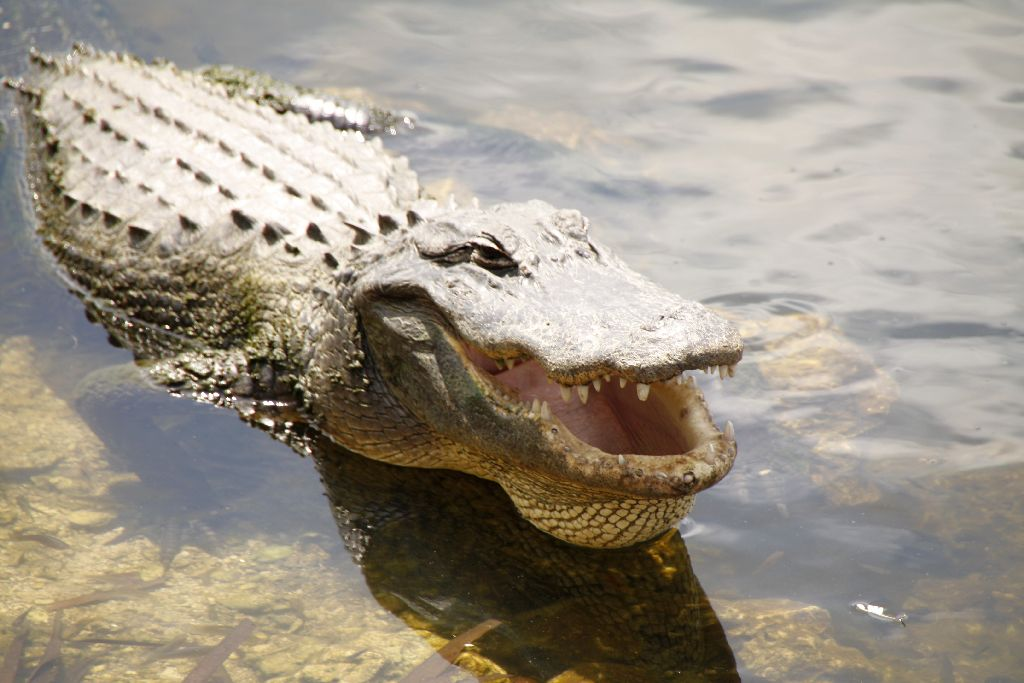 Florida-231.jpg