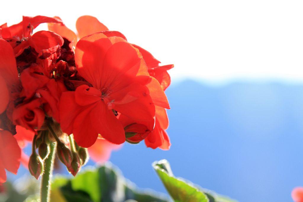 Südtirol-74.jpg
