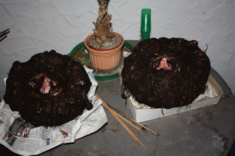 06 - 2014 - 4,6 + 5,4 kg.jpg