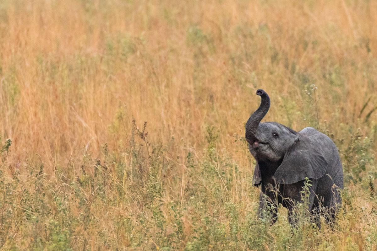 20180121.Uganda.IMG.0198.jpg