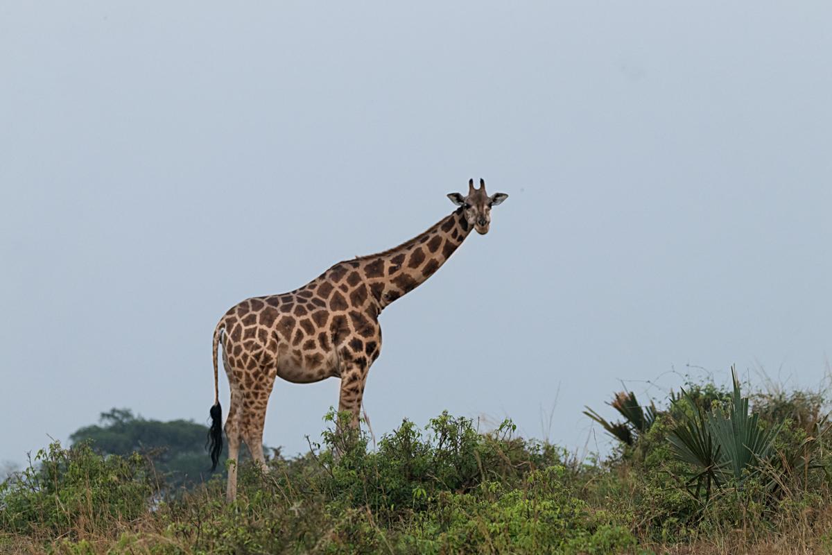 20180121.Uganda.IMG.0212.jpg