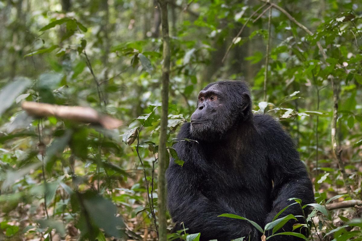 20180124.Uganda.IMG.0412.jpg