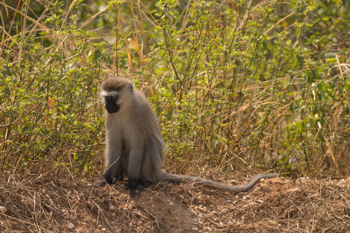 20180127.Uganda.IMG.0553.jpg