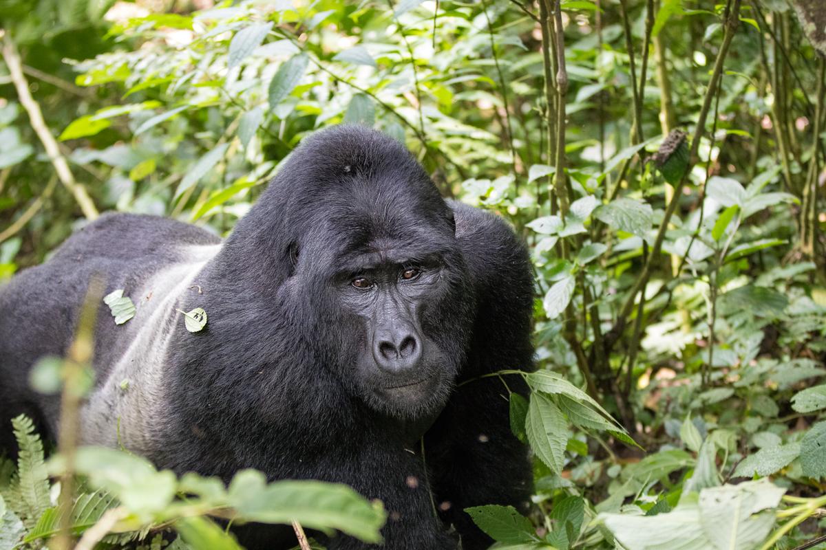 20180129.Uganda.IMG.0585.jpg