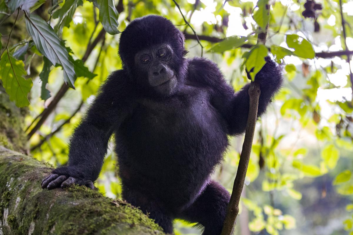 20180129.Uganda.IMG.0590.jpg