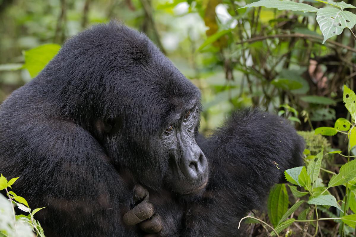 20180129.Uganda.IMG.0596.jpg