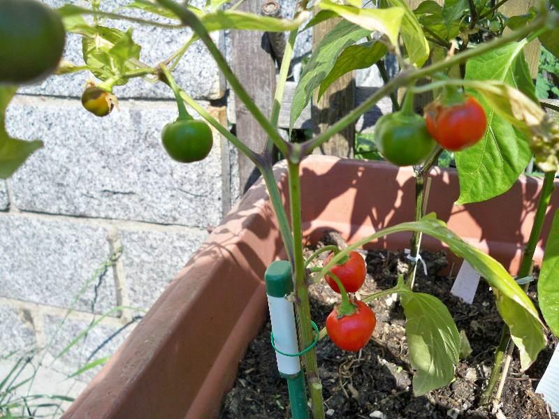 23unbekannt fruchtig scharf.jpg