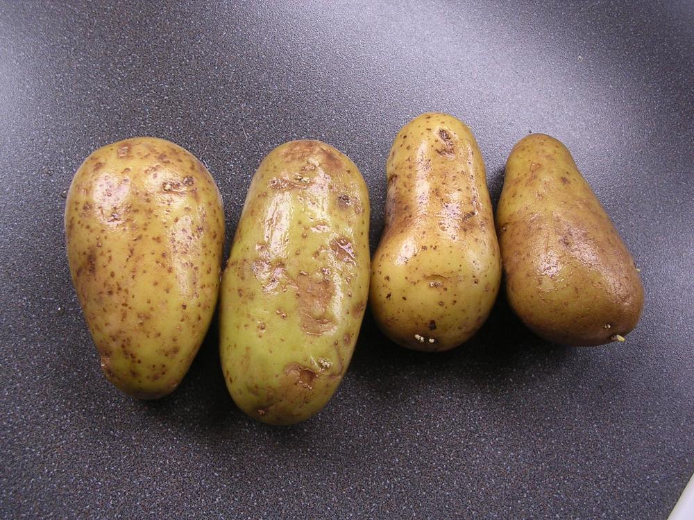 3 Kartoffeln.jpg