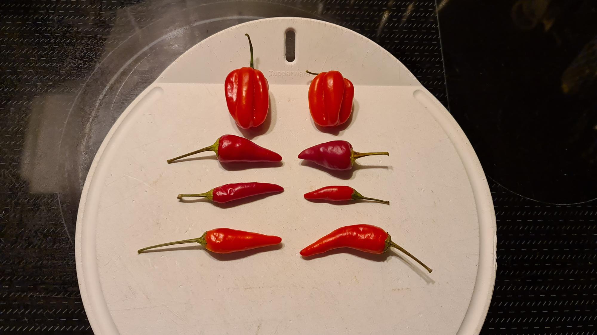 31 - Mehr Chilis für die HOT-sauce.png