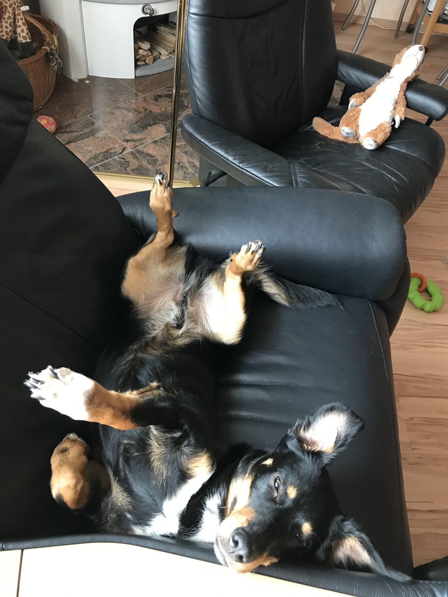 Hund Schläft Plötzlich Woanders