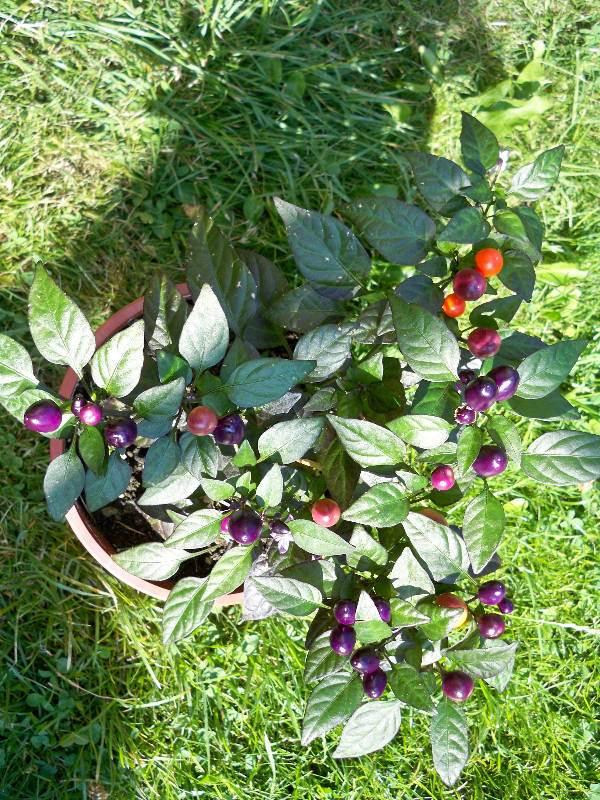 9pretty in purple.jpg