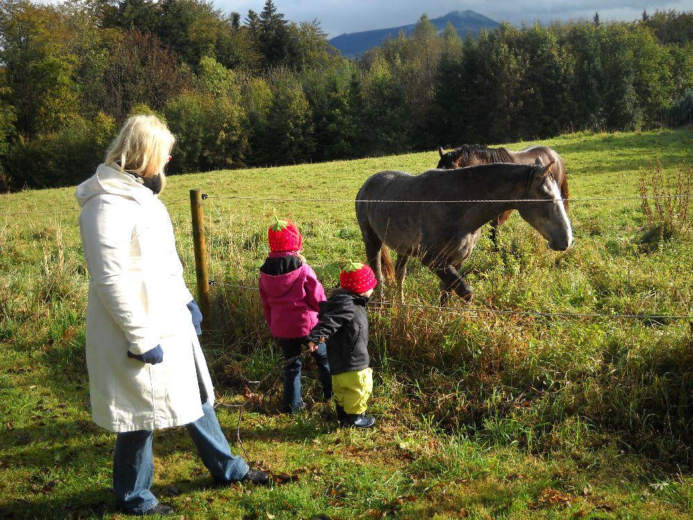 Alpenblick_2011_005.jpg