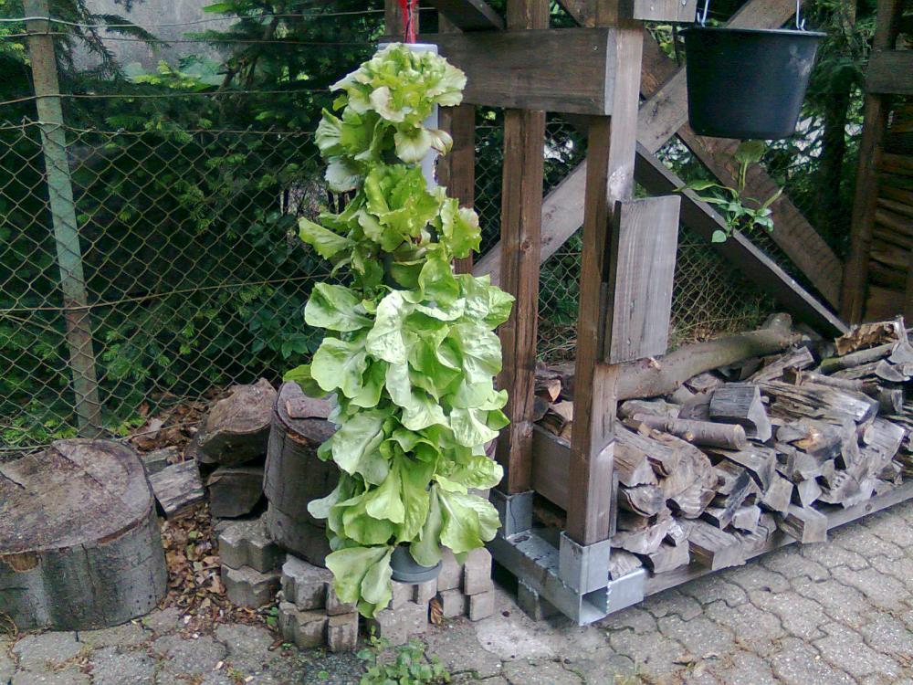 vertikales salatbeet seite 2 grillforum und bbq www. Black Bedroom Furniture Sets. Home Design Ideas