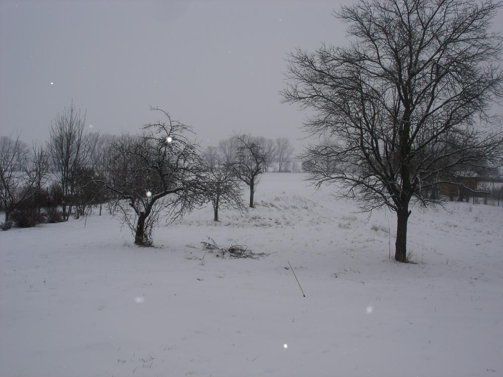 DSC06898.jpg