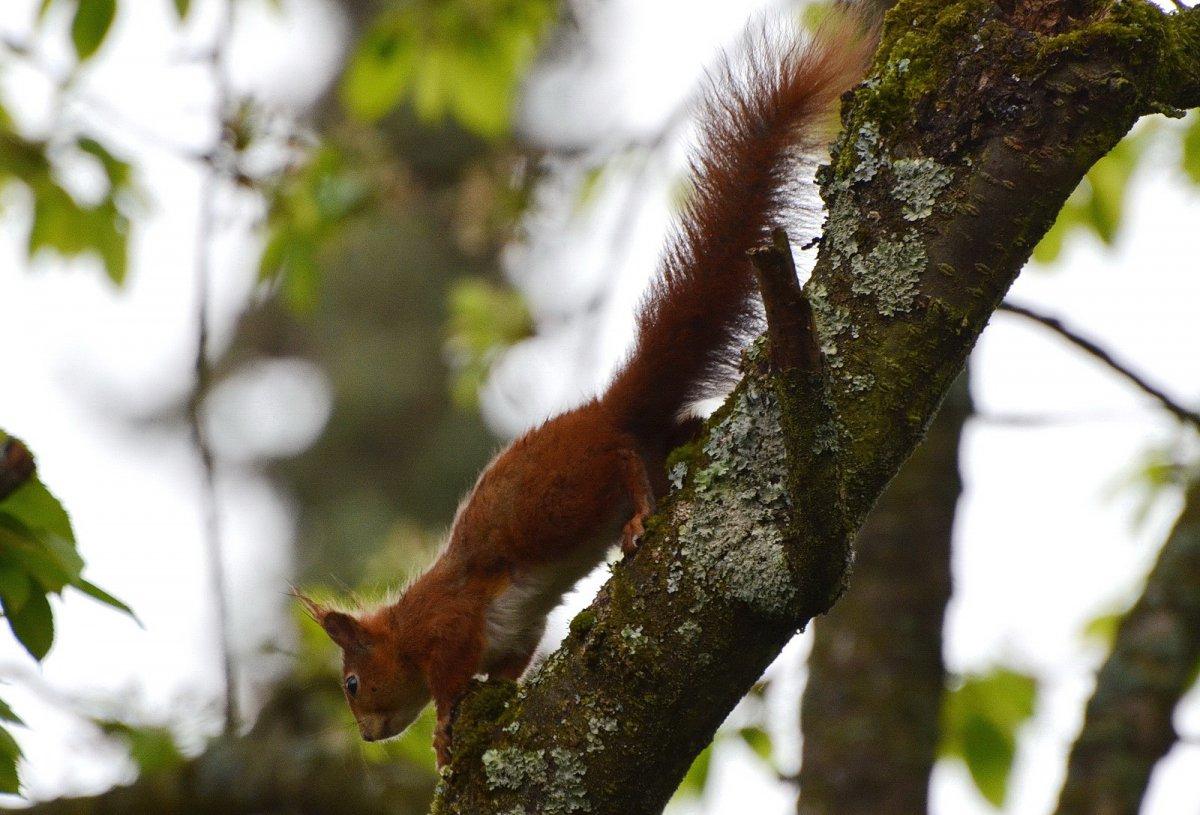 eichhörnchen2.jpg