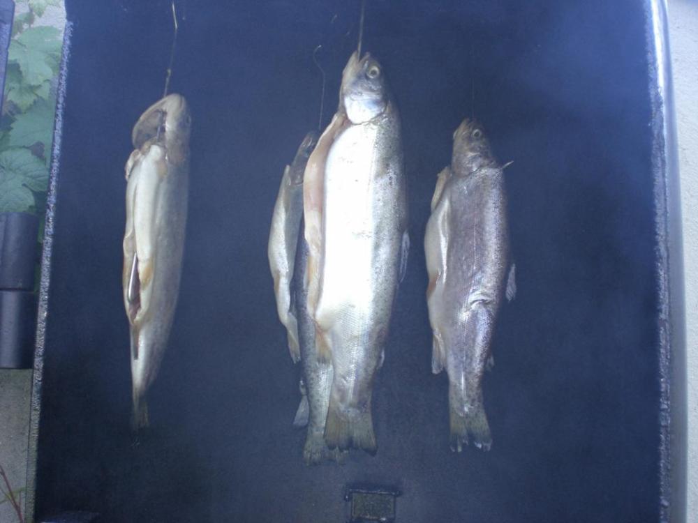 Fisch 001.jpg