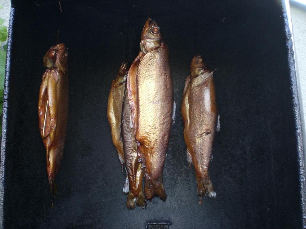 Fisch 003.jpg