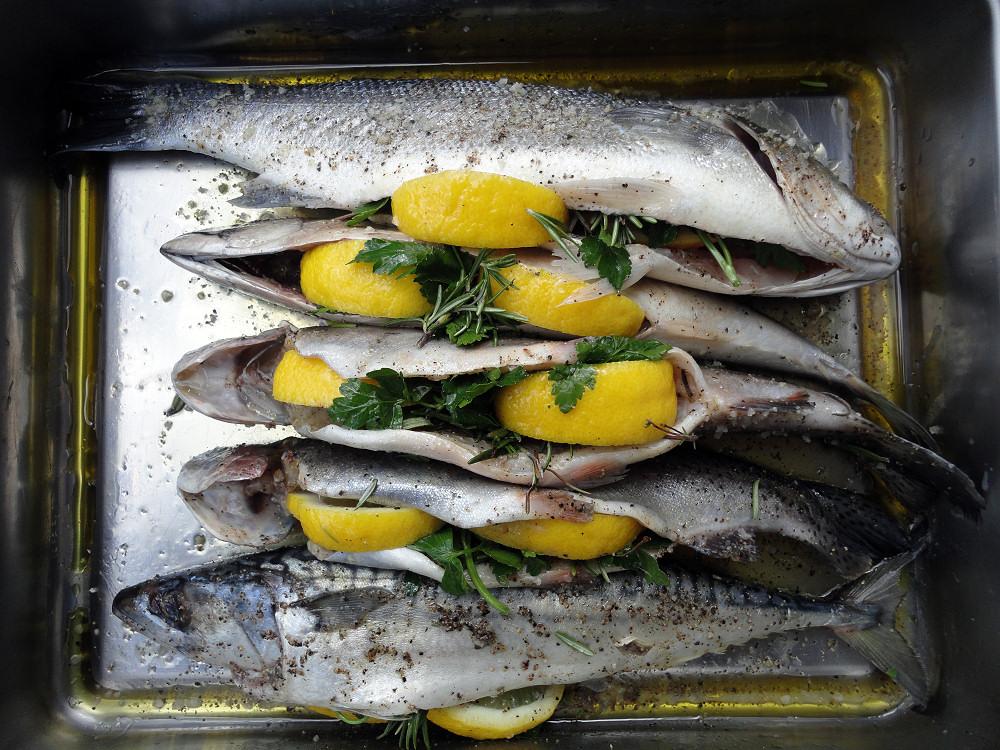 Fisch01.jpg