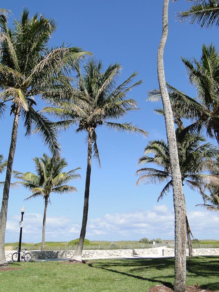 Florida-12.jpg