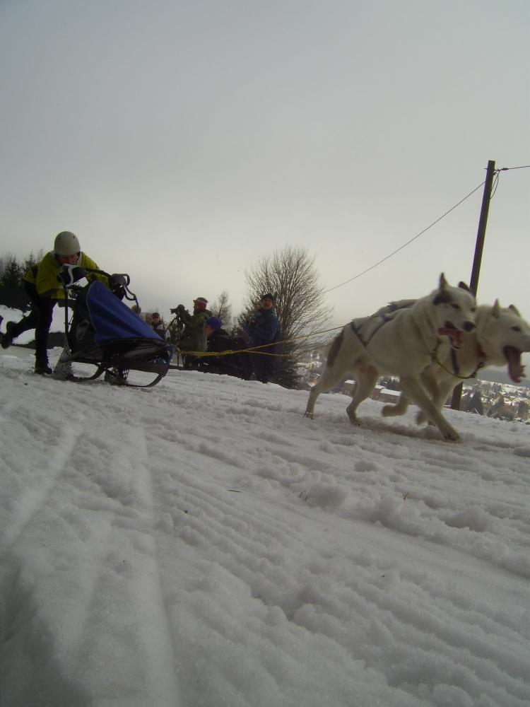 Hundeschlittenrennen 015.jpg