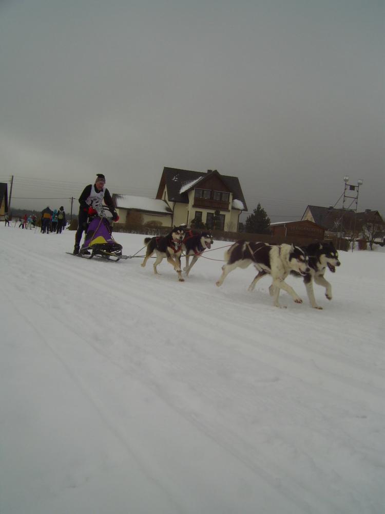 Hundeschlittenrennen 018.jpg