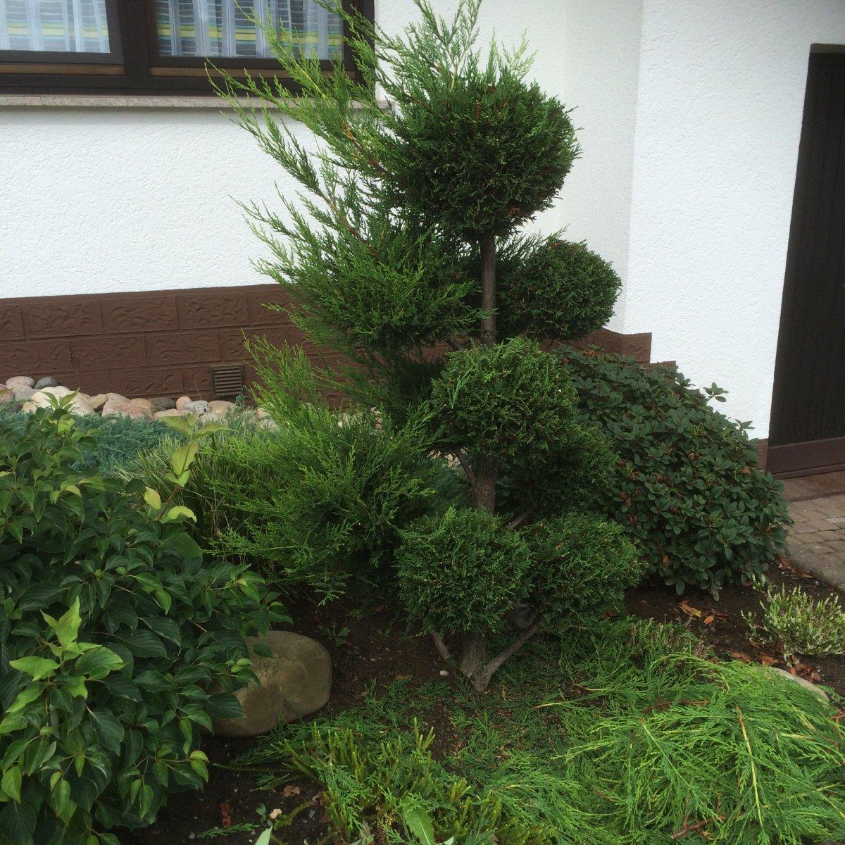 buchsbaum in form schneiden ber ideen zu buchsbaum. Black Bedroom Furniture Sets. Home Design Ideas
