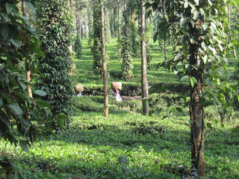 Indien013.jpg