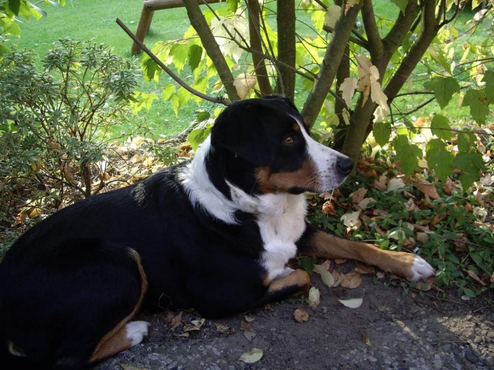 zeigt her eure hunde seite 3 grillforum und bbq www