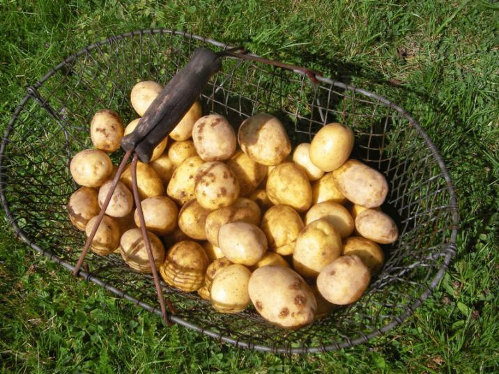 Kartoffelkorb.jpg
