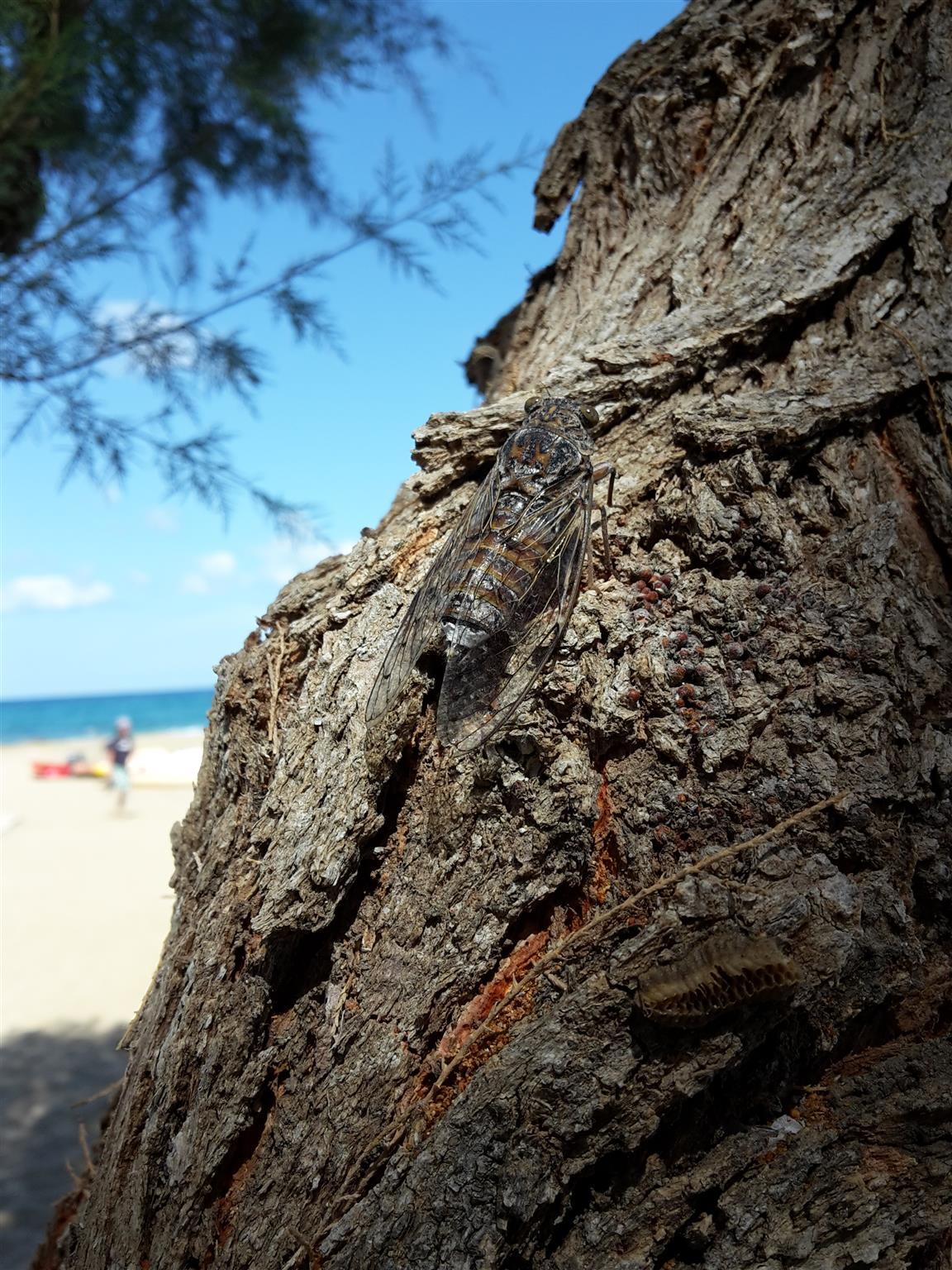 Kreta (13).jpg