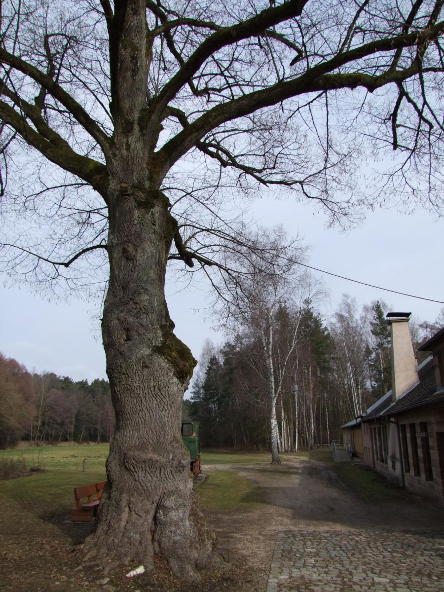 messerschmieden_eisenhammer13.jpg