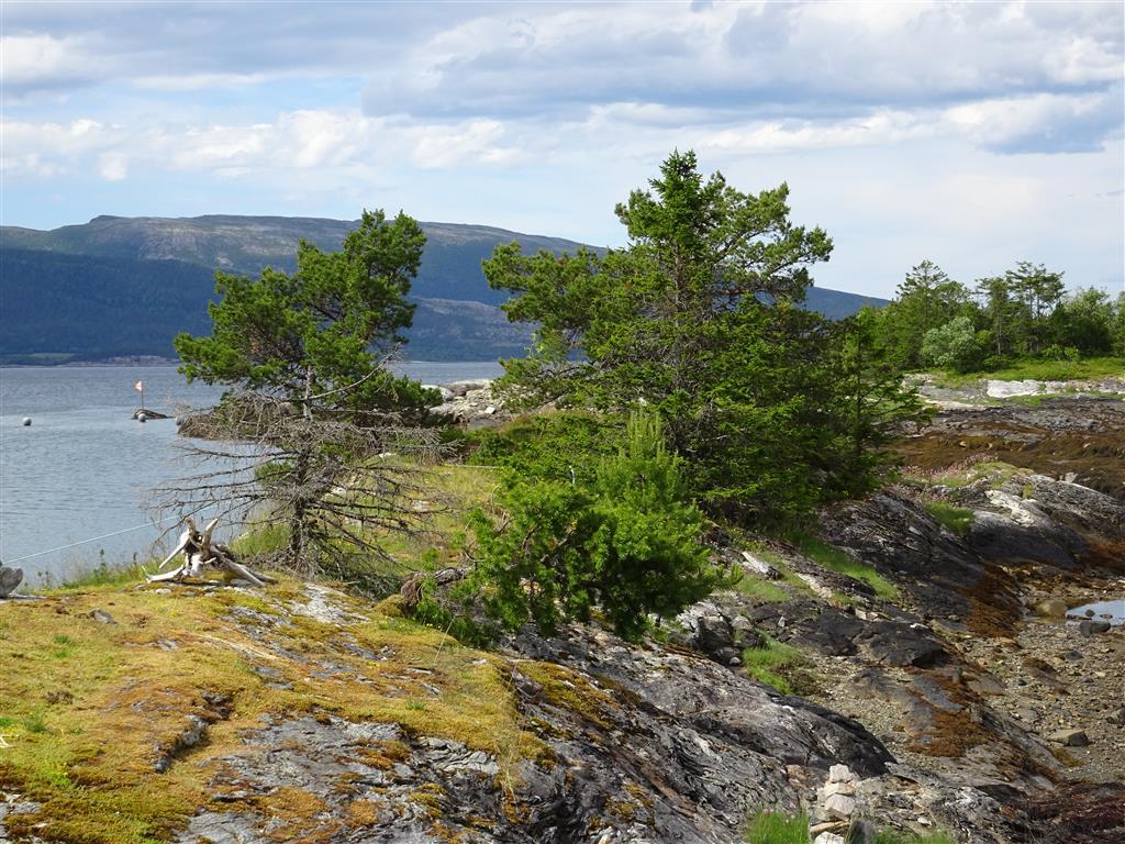 Norwegen_2016 (361).JPG