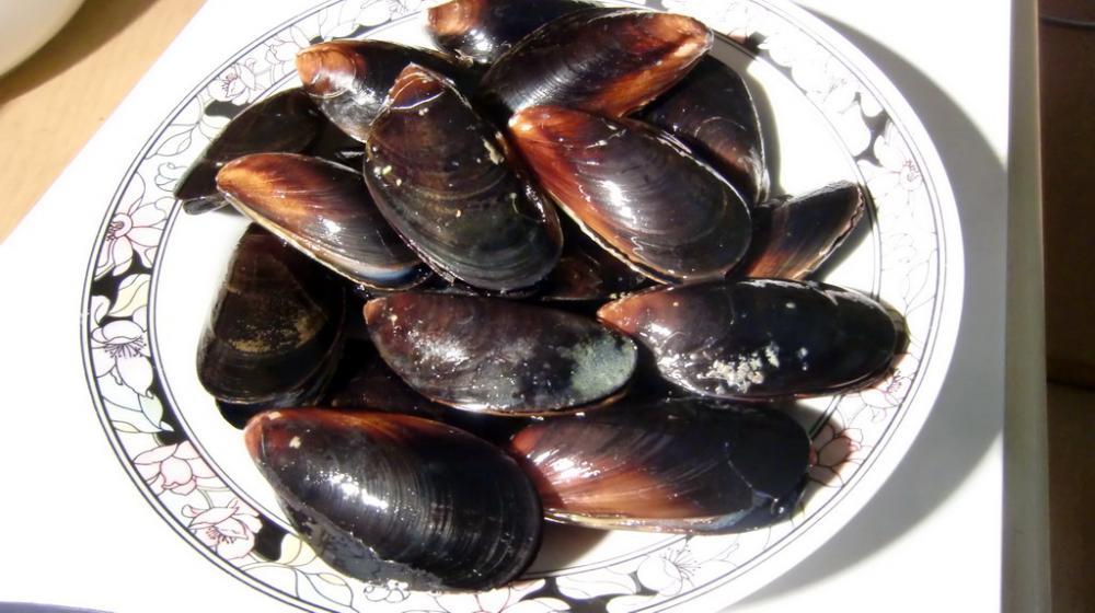 Paella (7).jpg