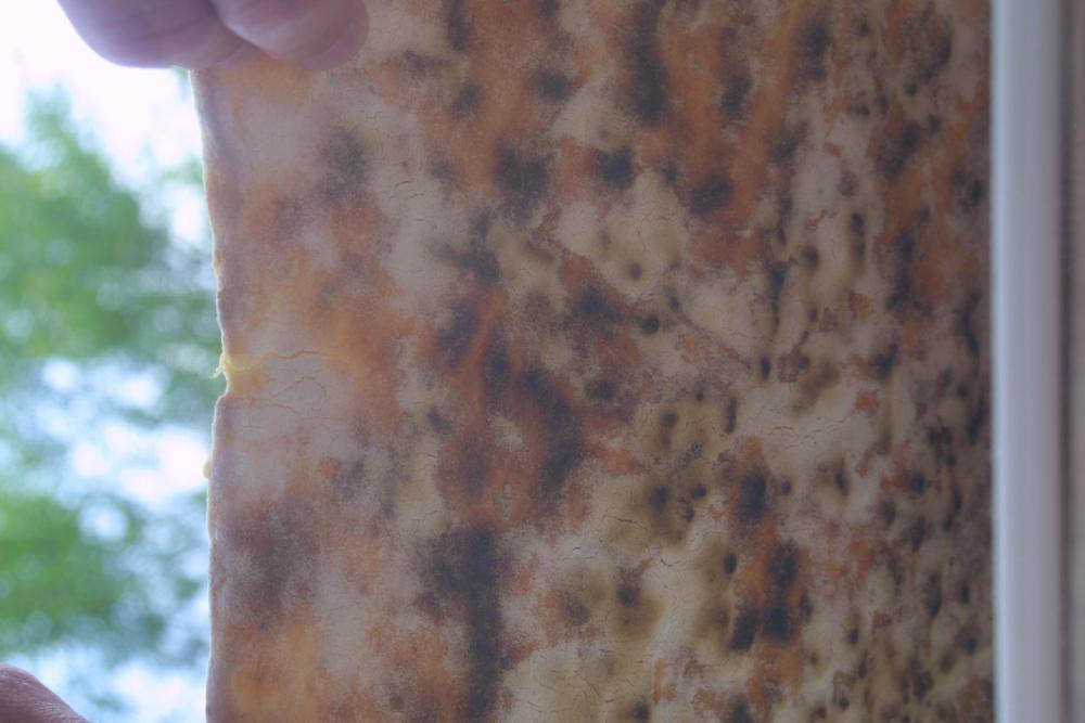 Pizza1boden.jpg