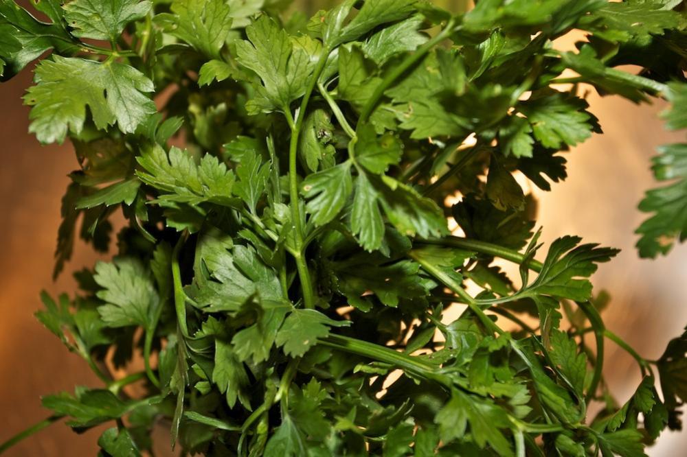 Sommersalate 2.jpg