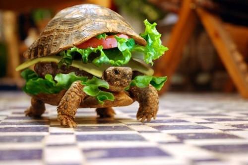 turtle-burger-500x332.jpg